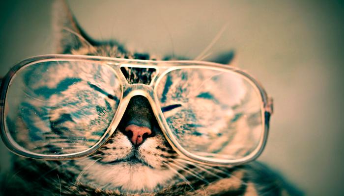Reddit, más allá de las fotos de gatitos
